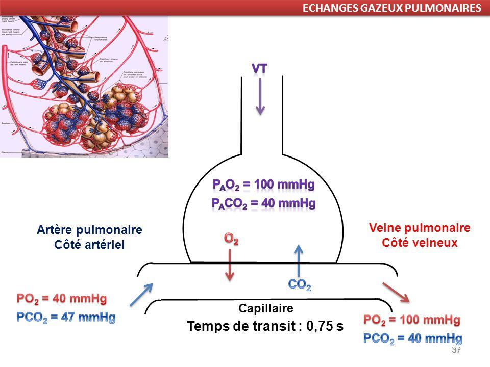 37 Temps de transit : 0,75 s 37 Artère pulmonaire Côté artériel Veine pulmonaire Côté veineux ECHANGES GAZEUX PULMONAIRES Capillaire