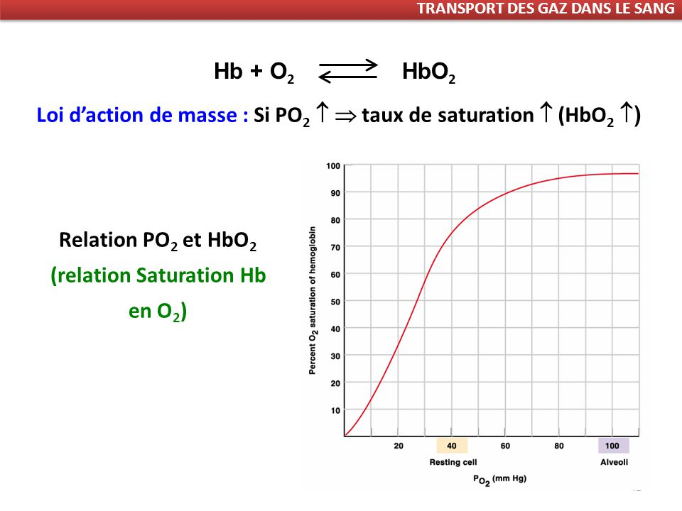 42 Hb + O 2 HbO 2 Loi daction de masse : Si PO 2 taux de saturation (HbO 2 ) Relation PO 2 et HbO 2 (relation Saturation Hb en O 2 ) TRANSPORT DES GAZ