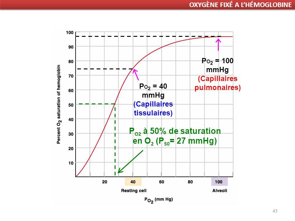 43 P O 2 = 100 mmHg (Capillaires pulmonaires) P O 2 = 40 mmHg (Capillaires tissulaires) P O2 à 50% de saturation en O 2 (P 50 = 27 mmHg) OXYGÈNE FIXÉ A LHÉMOGLOBINE