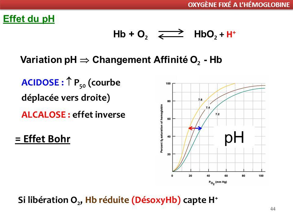 44 = Effet Bohr 44 Si libération O 2, Hb réduite (DésoxyHb) capte H + Hb + O 2 HbO 2 + H + Variation pH Changement Affinité O 2 - Hb ACIDOSE : P 50 (courbe déplacée vers droite) ALCALOSE : effet inverse Effet du pH pH OXYGÈNE FIXÉ A LHÉMOGLOBINE