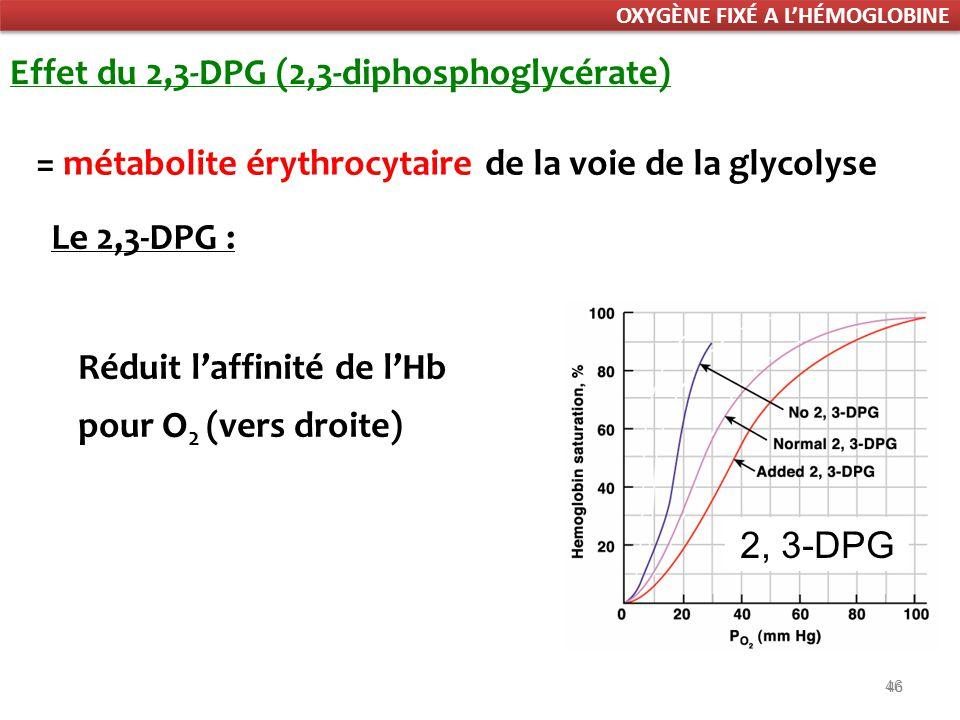 46 Effet du 2,3-DPG (2,3-diphosphoglycérate) Réduit laffinité de lHb pour O 2 (vers droite) = métabolite érythrocytaire de la voie de la glycolyse Le 2,3-DPG : 2, 3-DPG OXYGÈNE FIXÉ A LHÉMOGLOBINE
