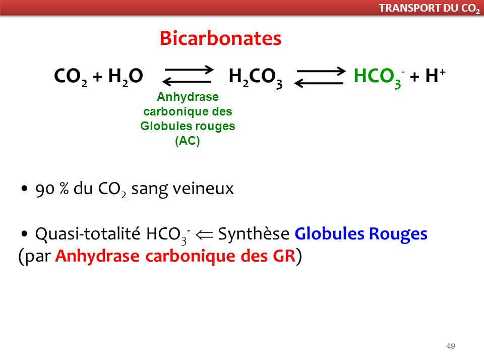 49 Bicarbonates 90 % du CO 2 sang veineux Quasi-totalité HCO 3 - Synthèse Globules Rouges (par Anhydrase carbonique des GR) Anhydrase carbonique des Globules rouges (AC) CO 2 + H 2 O H 2 CO 3 HCO 3 - + H + TRANSPORT DU CO 2