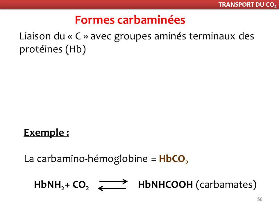 50 Exemple : La carbamino-hémoglobine = HbCO 2 HbNH 2 + CO 2 HbNHCOOH (carbamates) Formes carbaminées Liaison du « C » avec groupes aminés terminaux des protéines (Hb) TRANSPORT DU CO 2