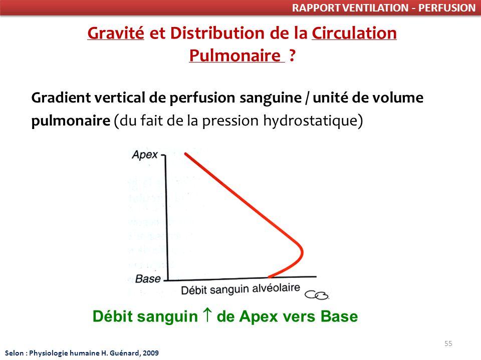 55 RAPPORT VENTILATION - PERFUSION Gravité et Distribution de la Circulation Pulmonaire .