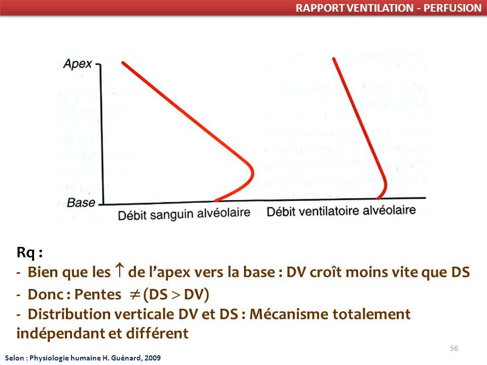56 RAPPORT VENTILATION - PERFUSION Rq : - Bien que les de lapex vers la base : DV croît moins vite que DS - Donc : Pentes (DS DV) - Distribution verticale DV et DS : Mécanisme totalement indépendant et différent Selon : Physiologie humaine H.
