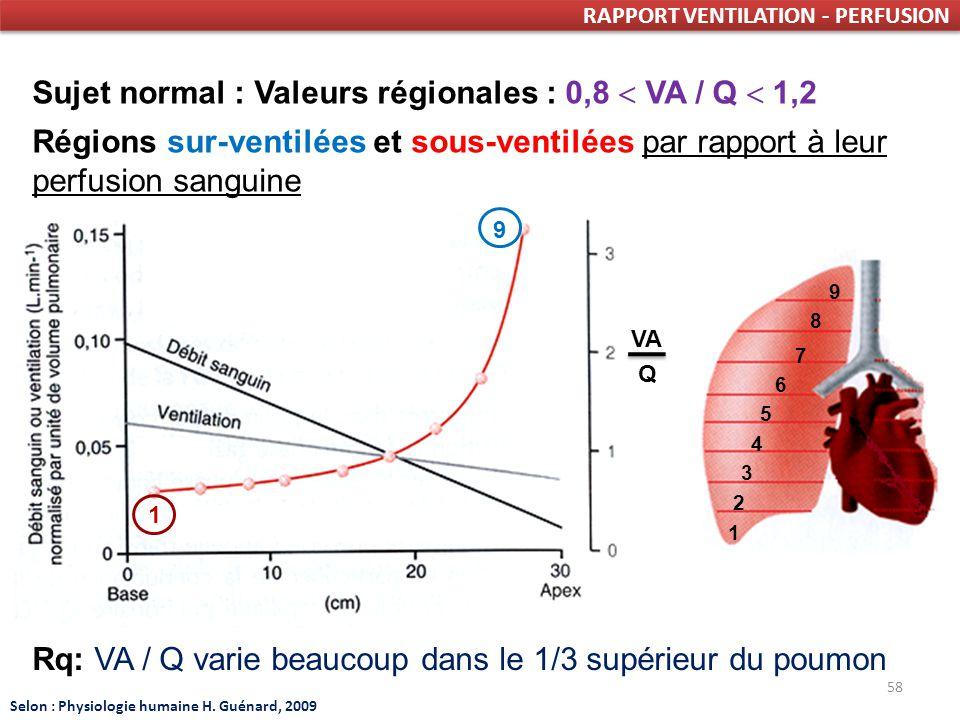 58 RAPPORT VENTILATION - PERFUSION VA Q Sujet normal : Valeurs régionales : 0,8 VA / Q 1,2 Régions sur-ventilées et sous-ventilées par rapport à leur perfusion sanguine 1 3 2 4 5 6 8 7 9 Rq: VA / Q varie beaucoup dans le 1/3 supérieur du poumon Selon : Physiologie humaine H.