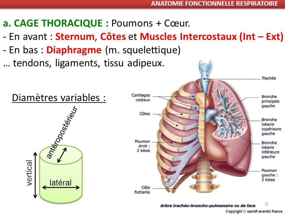 6 a.CAGE THORACIQUE : Poumons + Cœur.