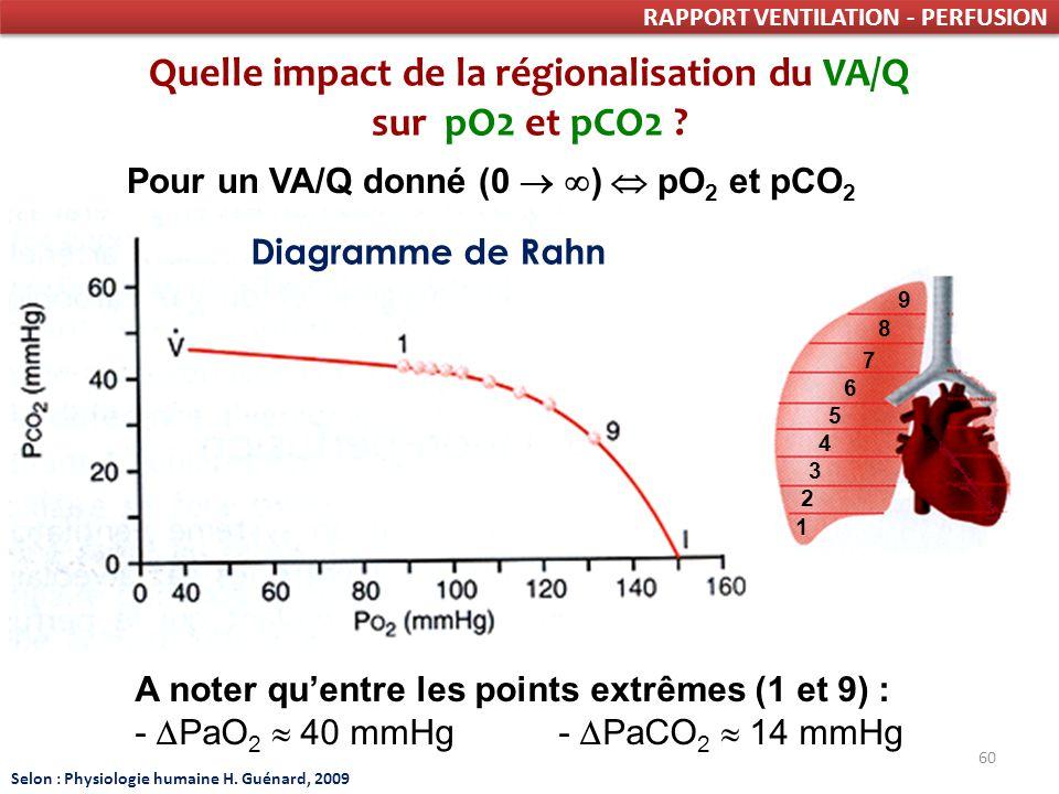 60 RAPPORT VENTILATION - PERFUSION Quelle impact de la régionalisation du VA/Q sur pO2 et pCO2 .