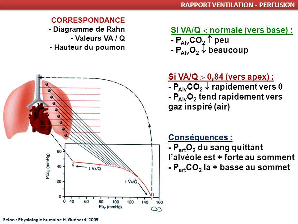 RAPPORT VENTILATION - PERFUSION CORRESPONDANCE - Diagramme de Rahn - Valeurs VA / Q - Hauteur du poumon Si VA/Q normale (vers base) : - P Alv CO 2 peu - P Alv O 2 beaucoup Si VA/Q 0,84 (vers apex) : - P Alv CO 2 rapidement vers 0 - P Alv O 2 tend rapidement vers gaz inspiré (air) Conséquences : - P art O 2 du sang quittant lalvéole est + forte au somment - P art CO 2 la + basse au sommet Selon : Physiologie humaine H.