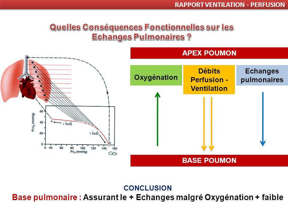 RAPPORT VENTILATION - PERFUSION Oxygénation Débits Perfusion - Ventilation APEX POUMON BASE POUMON Echanges pulmonaires CONCLUSION Base pulmonaire : Assurant le + Echanges malgré Oxygénation + faible
