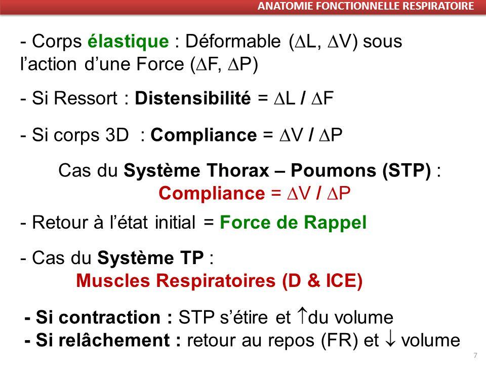 7 - Corps élastique : Déformable ( L, V) sous laction dune Force ( F, P) - Si Ressort : Distensibilité = L / F - Si corps 3D : Compliance = V / P Cas du Système Thorax – Poumons (STP) : Compliance = V / P - Retour à létat initial = Force de Rappel - Cas du Système TP : Muscles Respiratoires (D & ICE) - Si contraction : STP sétire et du volume - Si relâchement : retour au repos (FR) et volume ANATOMIE FONCTIONNELLE RESPIRATOIRE