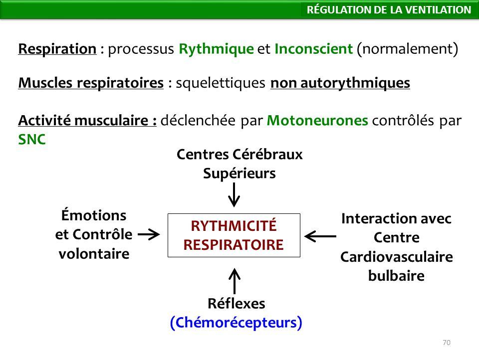 70 Respiration : processus Rythmique et Inconscient (normalement) Muscles respiratoires : squelettiques non autorythmiques Activité musculaire : déclenchée par Motoneurones contrôlés par SNC RYTHMICITÉ RESPIRATOIRE Émotions et Contrôle volontaire Interaction avec Centre Cardiovasculaire bulbaire Réflexes (Chémorécepteurs) Centres Cérébraux Supérieurs Régulation de la Ventilation RÉGULATION DE LA VENTILATION