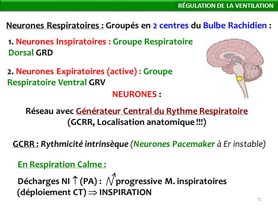 71 NEURONES : Réseau avec Générateur Central du Rythme Respiratoire (GCRR, Localisation anatomique !!!) GCRR : Rythmicité intrinsèque (Neurones Pacemaker à Er instable) Neurones Respiratoires : Groupés en 2 centres du Bulbe Rachidien : 1.