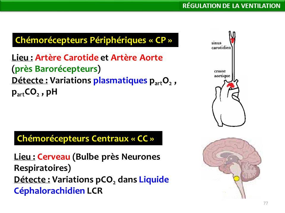 77 Chémorécepteurs Périphériques « CP » Lieu : Artère Carotide et Artère Aorte (près Barorécepteurs) Détecte : Variations plasmatiques p art O 2, p art CO 2, pH Chémorécepteurs Centraux « CC » Lieu : Cerveau (Bulbe près Neurones Respiratoires) Détecte : Variations pCO 2 dans Liquide Céphalorachidien LCR Régulation de la Ventilation RÉGULATION DE LA VENTILATION