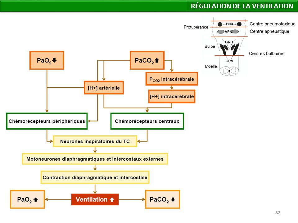 82 Régulation de la Ventilation RÉGULATION DE LA VENTILATION