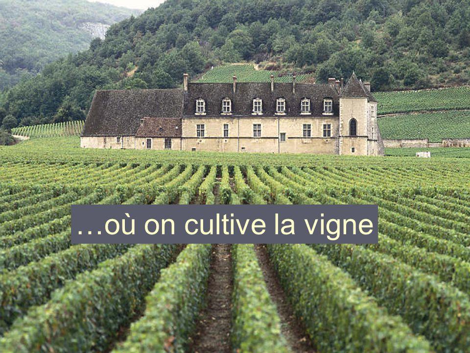 … où on cultive la vigne