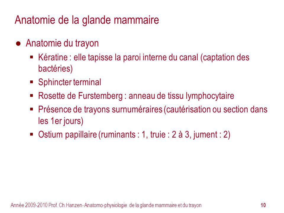 10 Année 2009-2010 Prof. Ch.Hanzen- Anatomo-physiologie de la glande mammaire et du trayon Anatomie de la glande mammaire Anatomie du trayon Kératine