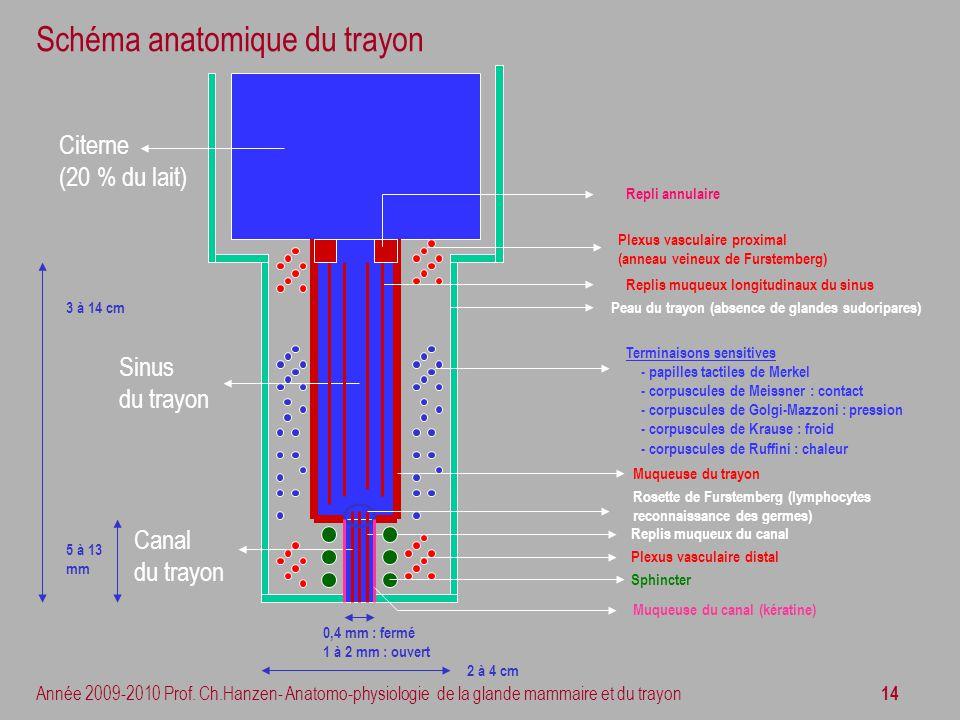 14 Année 2009-2010 Prof. Ch.Hanzen- Anatomo-physiologie de la glande mammaire et du trayon Schéma anatomique du trayon Citerne (20 % du lait) Muqueuse