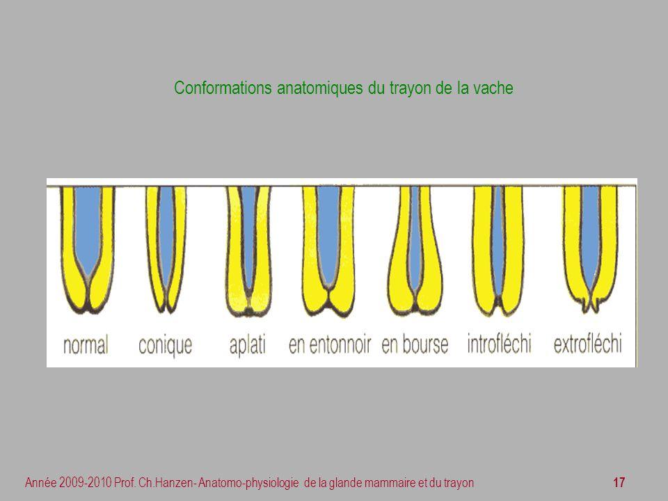 17 Année 2009-2010 Prof. Ch.Hanzen- Anatomo-physiologie de la glande mammaire et du trayon Conformations anatomiques du trayon de la vache