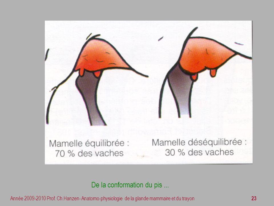 23 Année 2009-2010 Prof. Ch.Hanzen- Anatomo-physiologie de la glande mammaire et du trayon De la conformation du pis...
