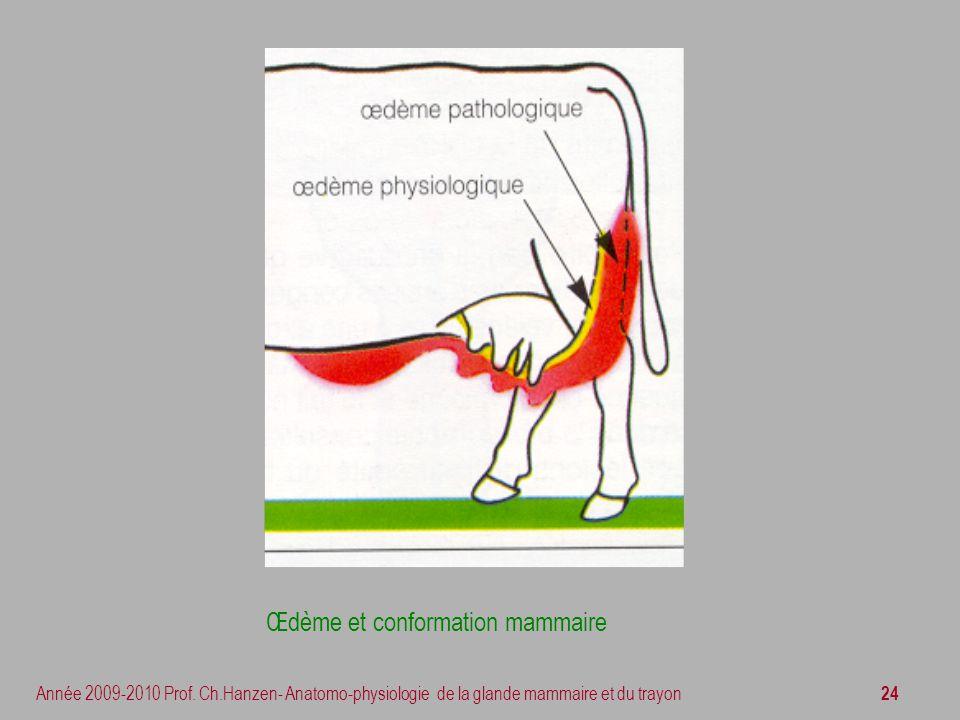 24 Année 2009-2010 Prof. Ch.Hanzen- Anatomo-physiologie de la glande mammaire et du trayon Œdème et conformation mammaire