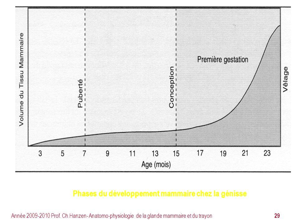 29 Année 2009-2010 Prof. Ch.Hanzen- Anatomo-physiologie de la glande mammaire et du trayon Phases du développement mammaire chez la génisse