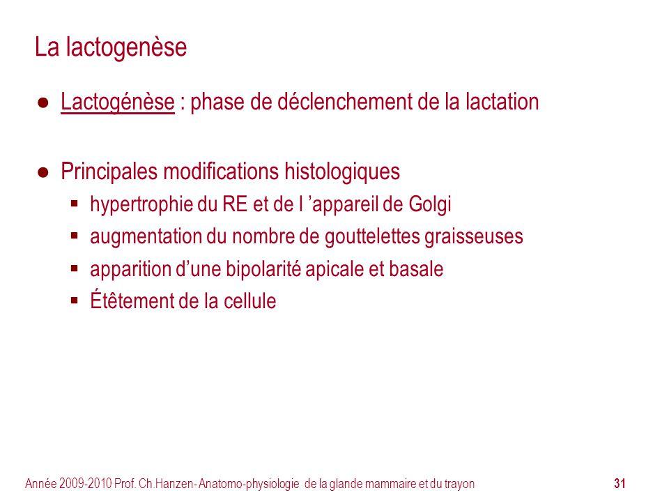 31 Année 2009-2010 Prof. Ch.Hanzen- Anatomo-physiologie de la glande mammaire et du trayon La lactogenèse Lactogénèse : phase de déclenchement de la l