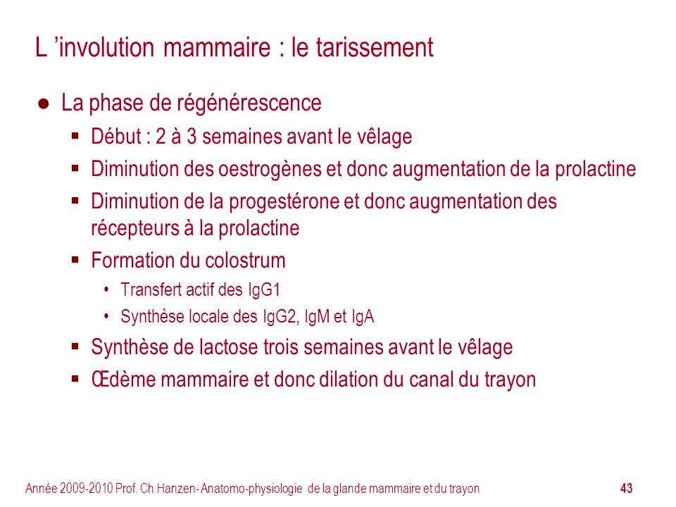 43 Année 2009-2010 Prof. Ch.Hanzen- Anatomo-physiologie de la glande mammaire et du trayon L involution mammaire : le tarissement La phase de régénére