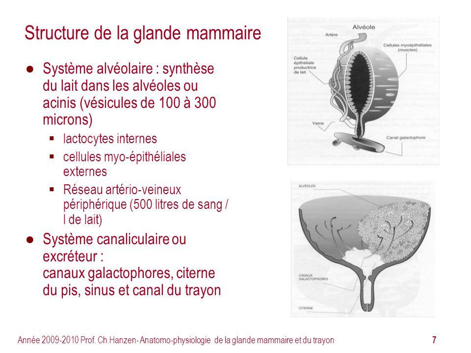 7 Année 2009-2010 Prof. Ch.Hanzen- Anatomo-physiologie de la glande mammaire et du trayon Structure de la glande mammaire Système alvéolaire : synthès