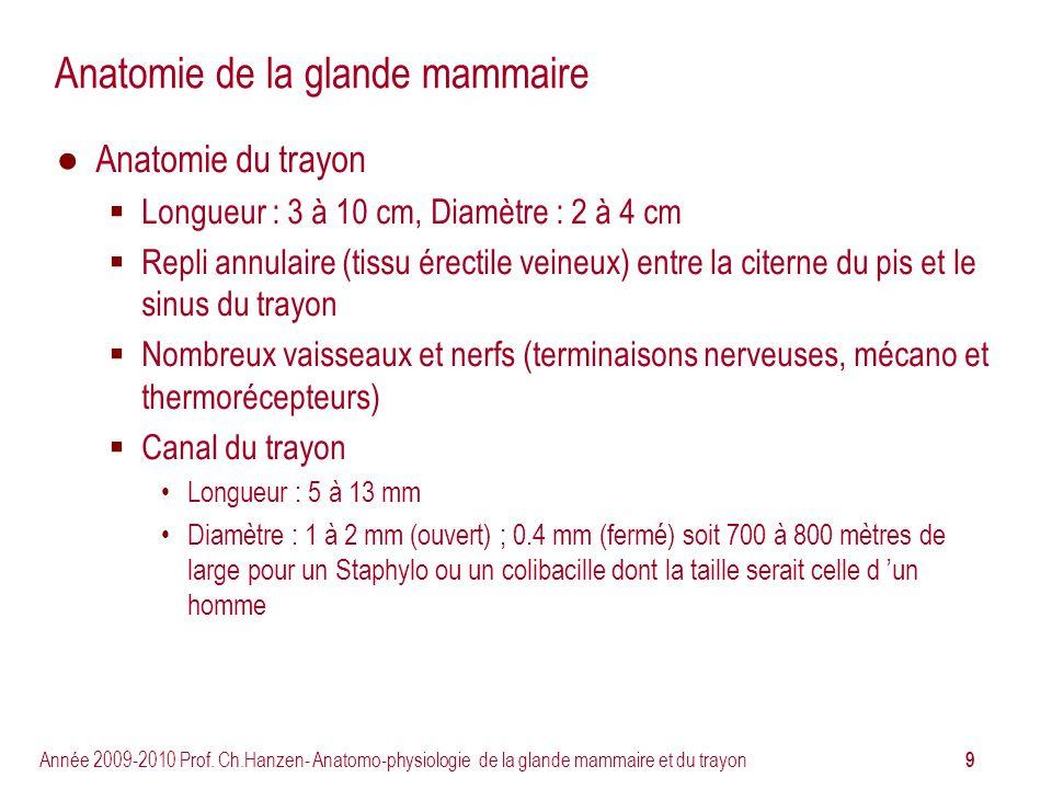 9 Année 2009-2010 Prof. Ch.Hanzen- Anatomo-physiologie de la glande mammaire et du trayon Anatomie de la glande mammaire Anatomie du trayon Longueur :