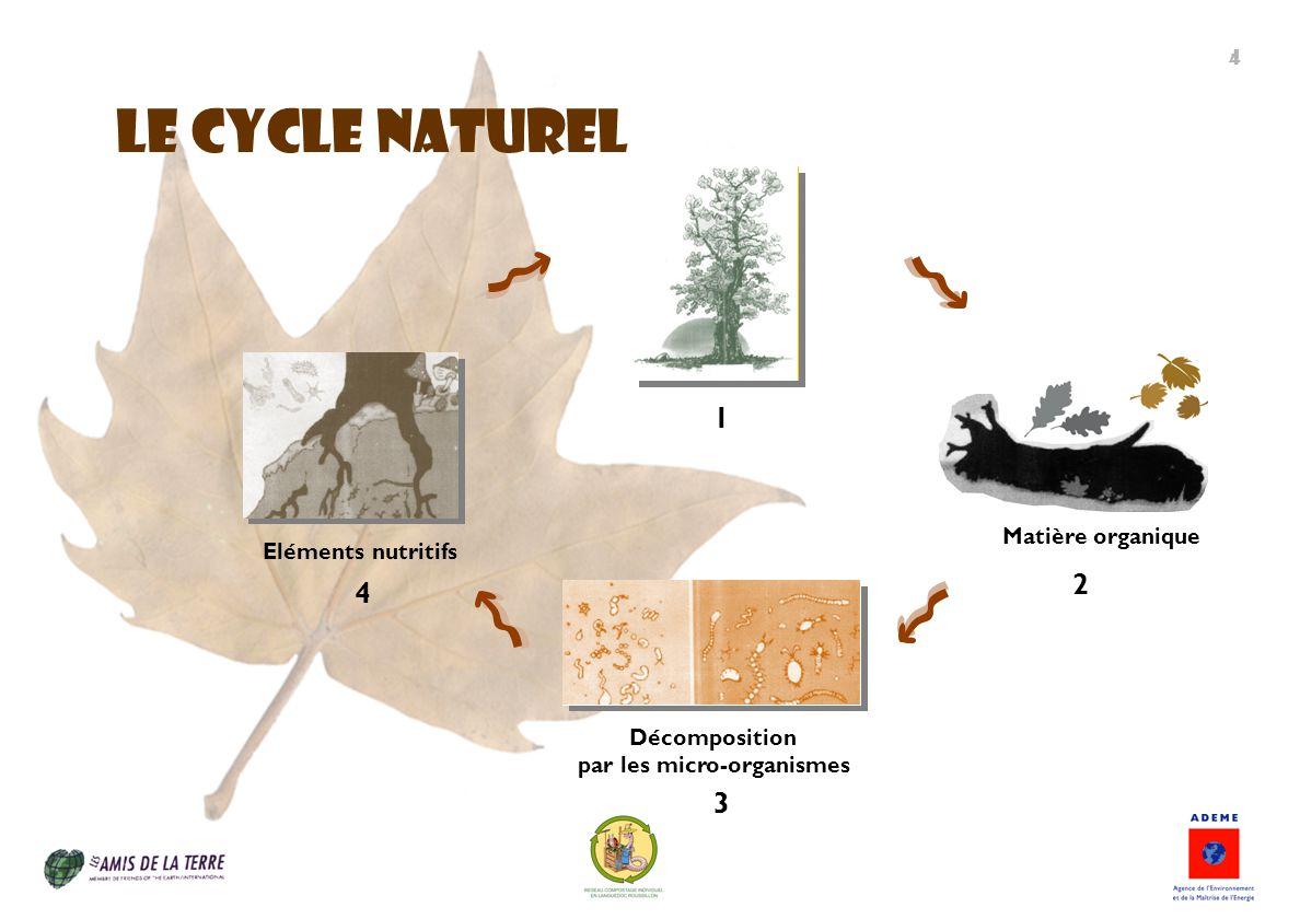 LE CYCLE NATUREL 1 Eléments nutritifs 4 Décomposition par les micro-organismes 3 Matière organique 2 4