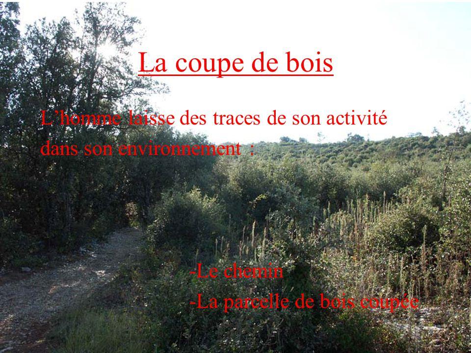 DANS LA CHENAIE Ce bois est constitué de : chênes verts, de pistachiers dérables de Montpellier.