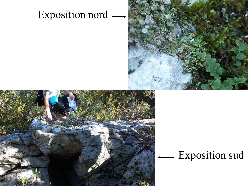Le sol dans la chênaie : De quoi est constitué le sol ? Quarrive-t-il aux feuilles ?