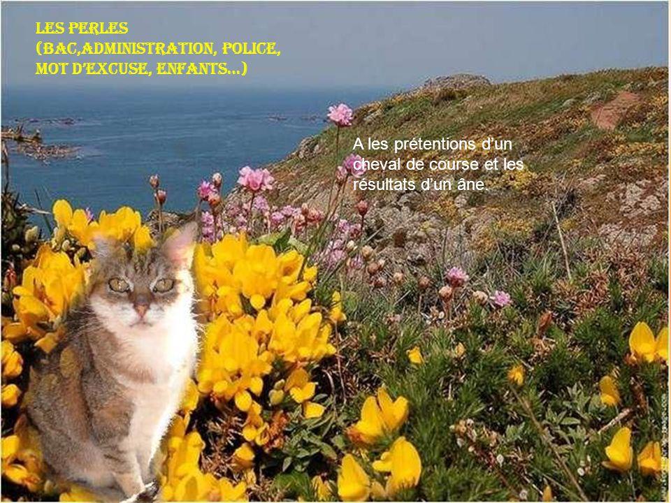 Les perles (Bac,Administration, Police, mot dexcuse, enfants…) A les prétentions dun cheval de course et les résultats dun âne.