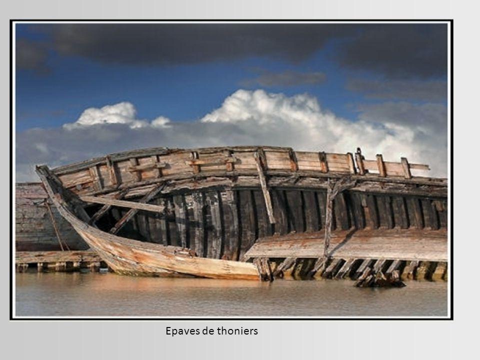 Epave de l'Eduard Bohlen à Conceptionbay. Ce cargo s'est échoué en 1909 sur la côte des Squelettes en Namibie. Il gît aujourd'hui à plus de 400 mètres