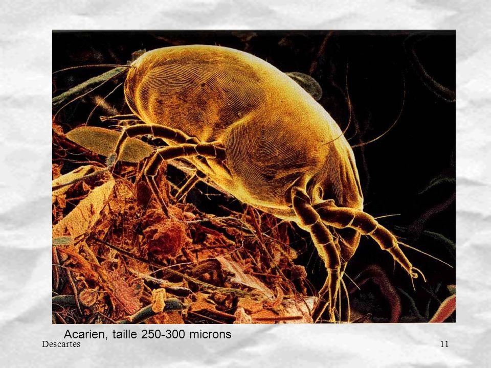 Descartes11 Acarien, taille 250-300 microns