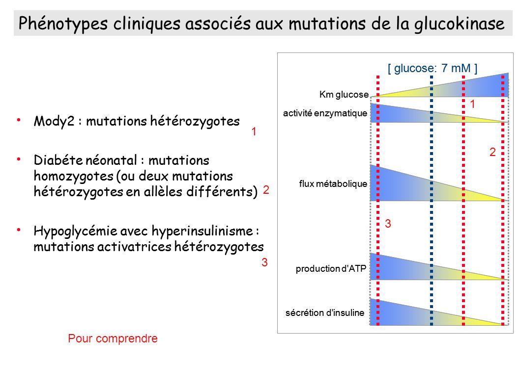 Phénotypes cliniques associés aux mutations de la glucokinase Mody2 : mutations hétérozygotes Diabéte néonatal : mutations homozygotes (ou deux mutations hétérozygotes en allèles différents) Hypoglycémie avec hyperinsulinisme : mutations activatrices hétérozygotes Km glucose activité enzymatique flux métabolique production d ATP sécrétion d insuline [ glucose: 7 mM ] Phénotypes cliniques associés aux mutations de la glucokinase Mody2 : mutations hétérozygotes Diabéte néonatal : mutations homozygotes (ou deux mutations hétérozygotes en allèles différents) Hypoglycémie avec hyperinsulinisme : mutations activatrices hétérozygotes Km glucose activité enzymatique flux métabolique production d ATP sécrétion d insuline [ glucose: 7 mM ] 1 2 3 1 2 3 Pour comprendre