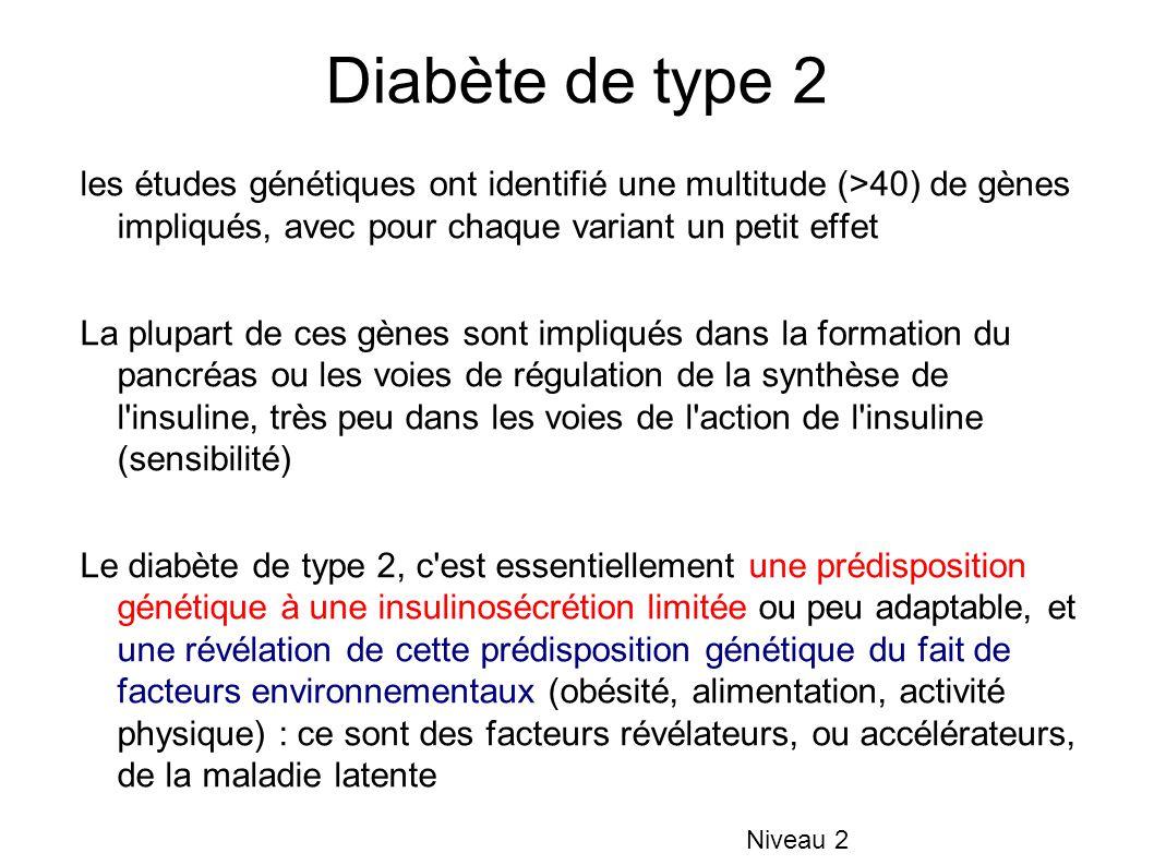 Diabète de type 2 les études génétiques ont identifié une multitude (>40) de gènes impliqués, avec pour chaque variant un petit effet La plupart de ces gènes sont impliqués dans la formation du pancréas ou les voies de régulation de la synthèse de l insuline, très peu dans les voies de l action de l insuline (sensibilité) Le diabète de type 2, c est essentiellement une prédisposition génétique à une insulinosécrétion limitée ou peu adaptable, et une révélation de cette prédisposition génétique du fait de facteurs environnementaux (obésité, alimentation, activité physique) : ce sont des facteurs révélateurs, ou accélérateurs, de la maladie latente Niveau 2