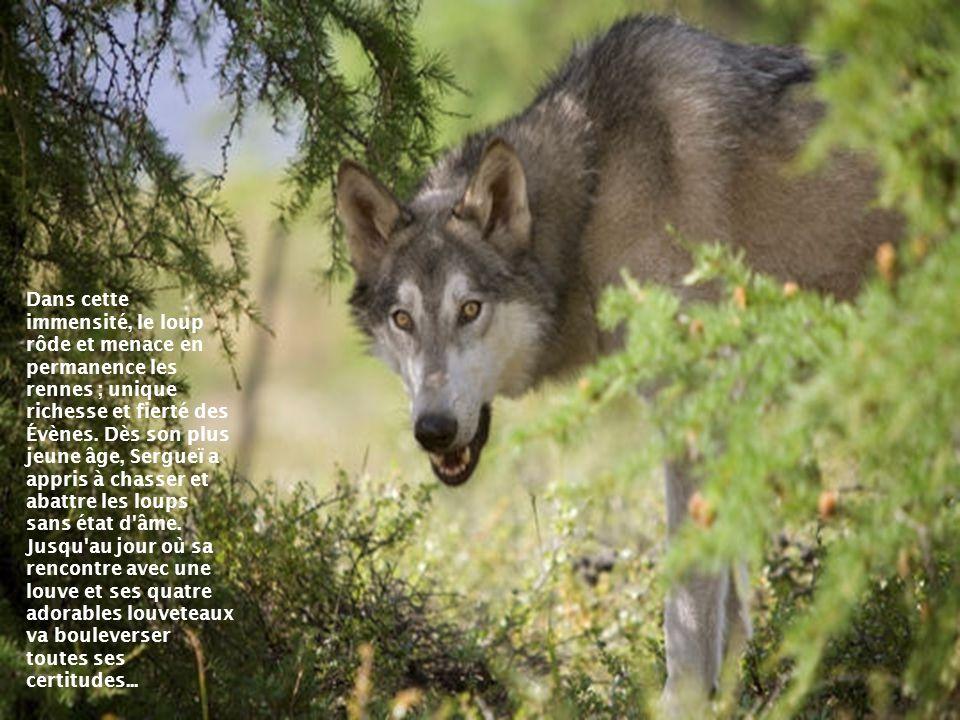 Sergueï se questionne sur la relation conflictuelle des hommes avec les loups et en particulier avec les éleveurs de rennes dont il fait partie, pour