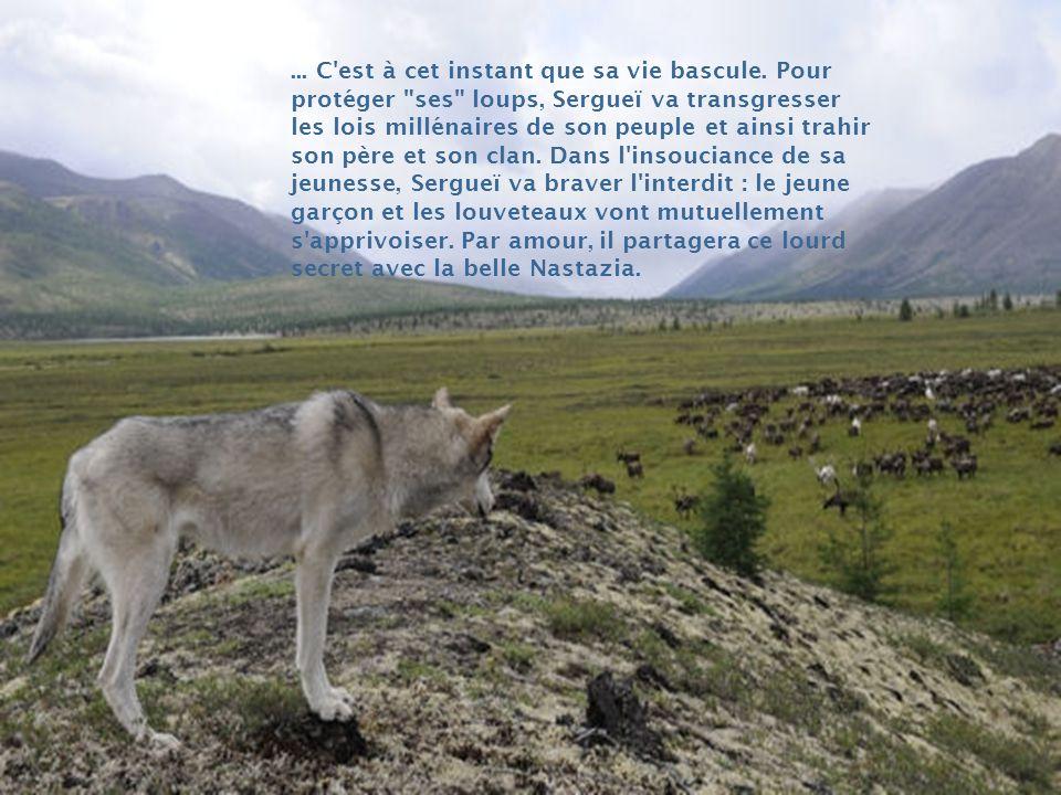 Dans cette immensité, le loup rôde et menace en permanence les rennes ; unique richesse et fierté des Évènes. Dès son plus jeune âge, Sergueï a appris
