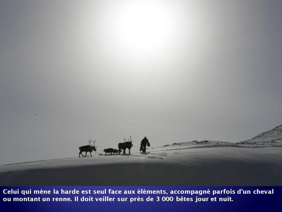 Sur d'immenses étendues glacées, les hardes de rennes sont menées par les Evènes, qui les font migrer pour les mener vers des pâturages plus riches.