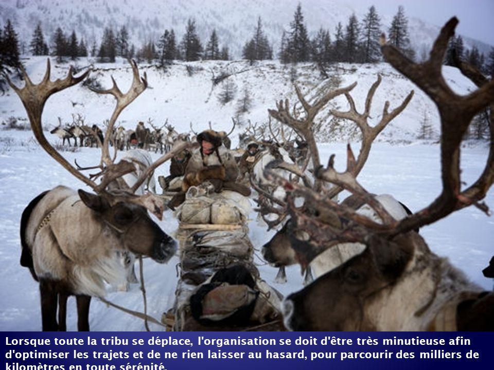 Au début du film, Sergueï compte bien protéger comme il se doit ses rennes du danger des loups... jusqu'à la rencontre d'une louve et de sa portée.
