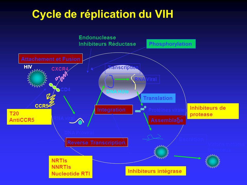 Phosphorylation Cycle de réplication du VIH CCR5 CXCR4 CD4 RNA viral DNA Proviral HIV DNA Hôte RNA Viral Protéines virales Reverse Transcription Integ