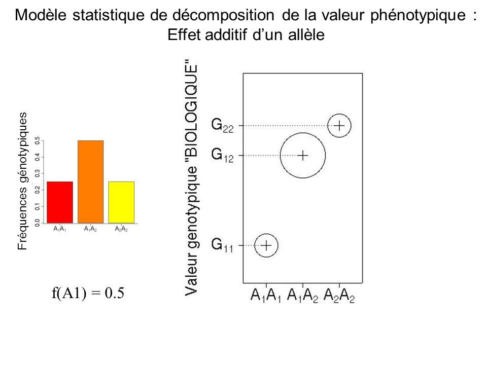 f(A1) = 0.5 Fréquences génotypiques Modèle statistique de décomposition de la valeur phénotypique : Effet additif dun allèle