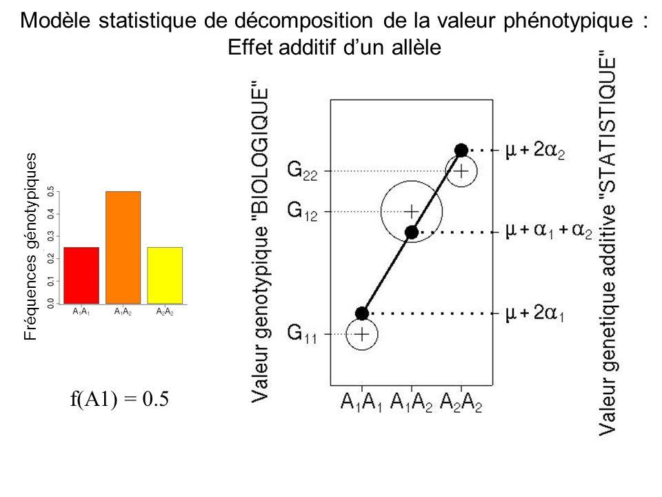 f(A1) = 0.4 Fréquences génotypiques Modèle statistique de décomposition de la valeur phénotypique : Effet additif dun allèle