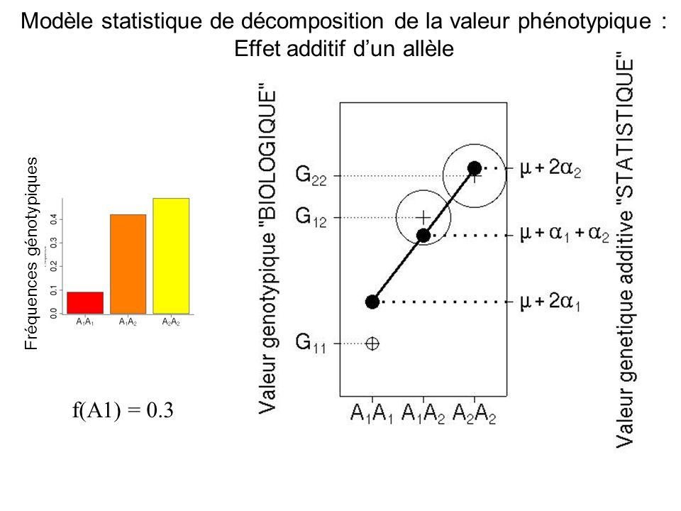 f(A1) = 0.3 Fréquences génotypiques Modèle statistique de décomposition de la valeur phénotypique : Effet additif dun allèle