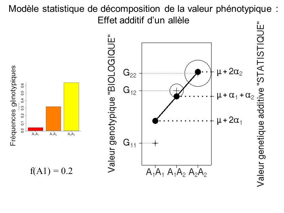 f(A1) = 0.2 Fréquences génotypiques Modèle statistique de décomposition de la valeur phénotypique : Effet additif dun allèle