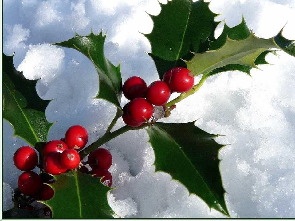 La neige papillonne La blanche neige papillonne Et fleurit les branches de houx. Elle se joue et tourbillonne En nous frôlant tout doux tout doux. La
