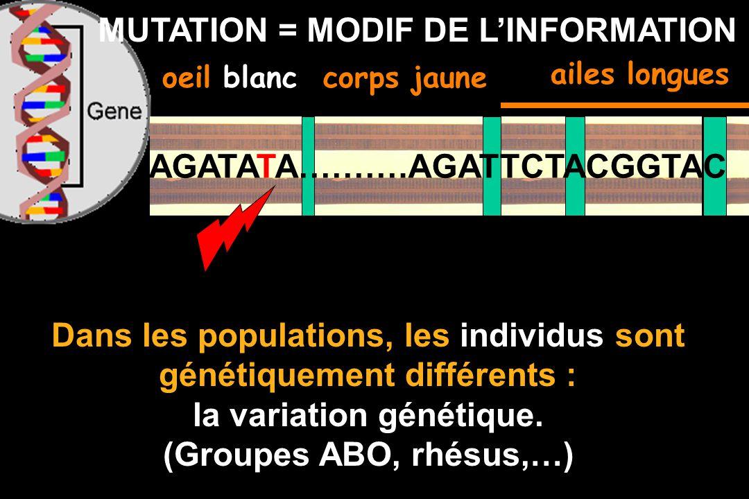 GENE = INFORMATION (langage) oeil rougecorps jaune Effet dagents mutagènes (rayons X, UV, chimiques): au hasard une lettre peut être modifiée en une a