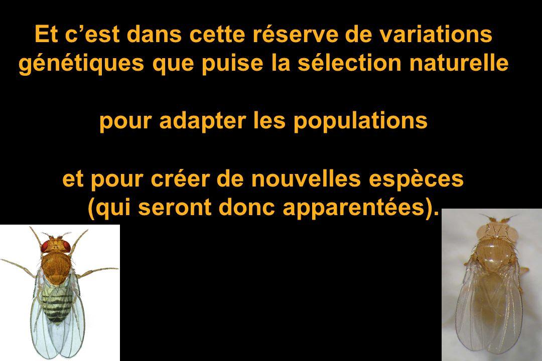 Dans pratiquement toutes les espèces la réserve de variation génétique est énorme: UN tiers des gènes possède des mutations différentes et fonctionnel